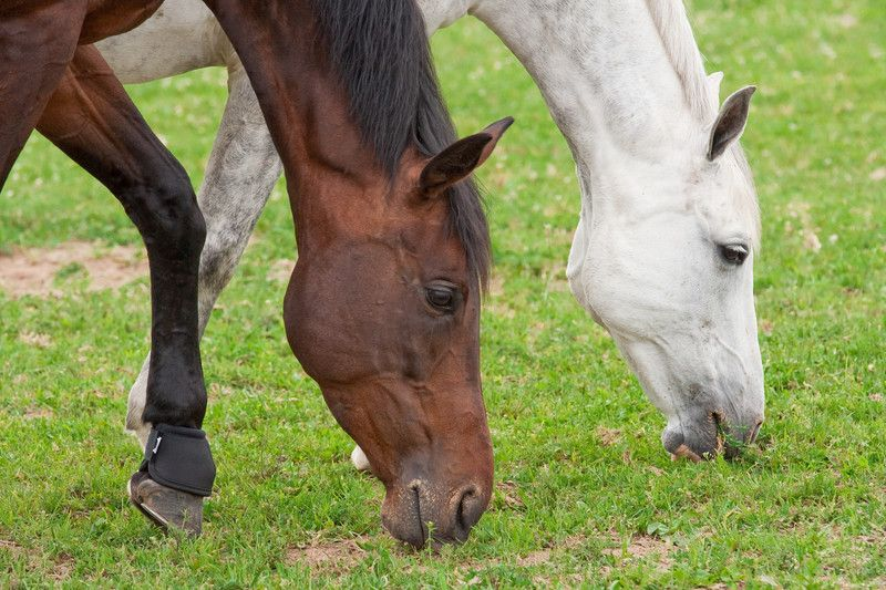 Equine Grass Sickness: what to do