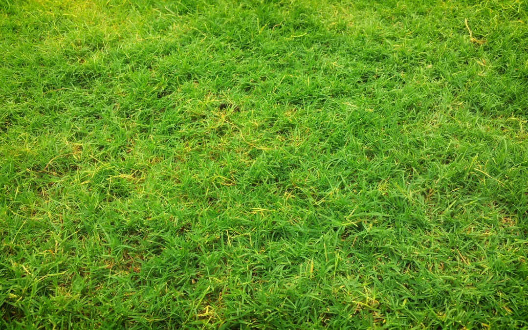 Essential soil nutrition for healthy grass…and your horses