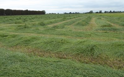 Generating a 'Sward Improvement Plan': using Albrecht soil sampling