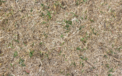 Weather proof soils to benefit grass and horses