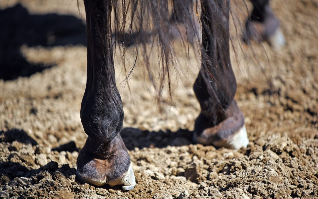 Is a lack of boron affecting your horse?
