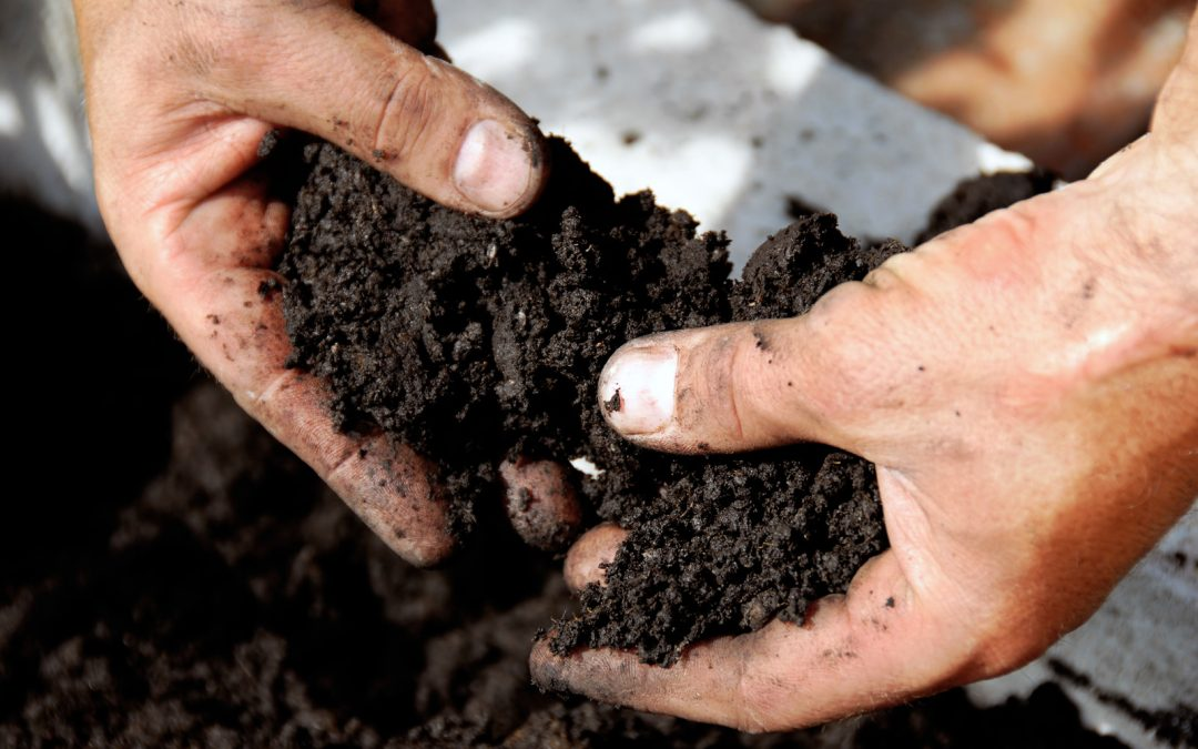 Agriculture Bill: rewarding farmers who protect soil