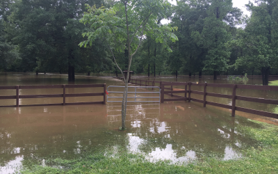 Waterlogged grassland: how to renovate damaged soil