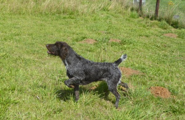 Dog training Yorkshire